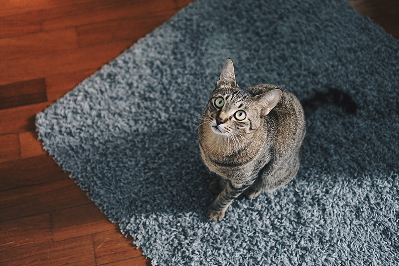 Rug Cleaning for Specialty Wool Rugs